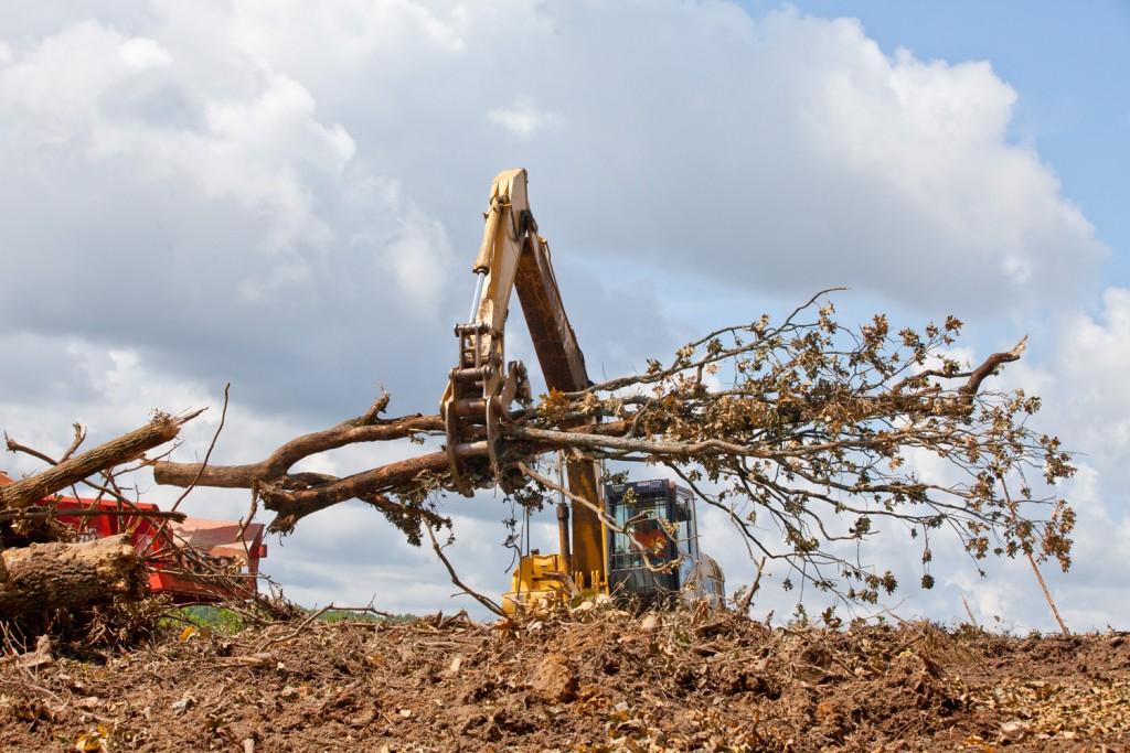 excavator-tree_7016_RGB